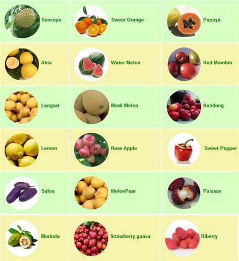 list of fruits fruits list www pixshark images galleries