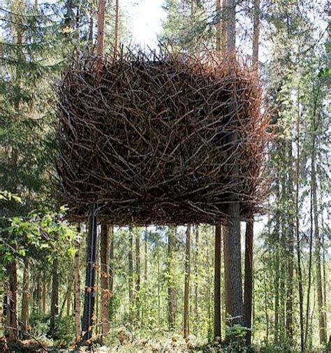 bird s nest tree house