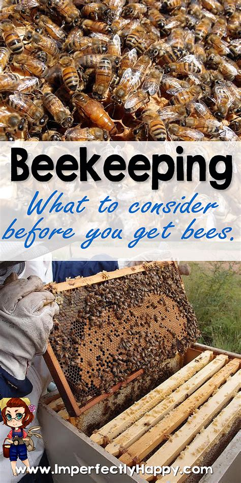 How To Keep Bees Or Bee Keeping In Rhode Island beekeeping what to consider before you get bees