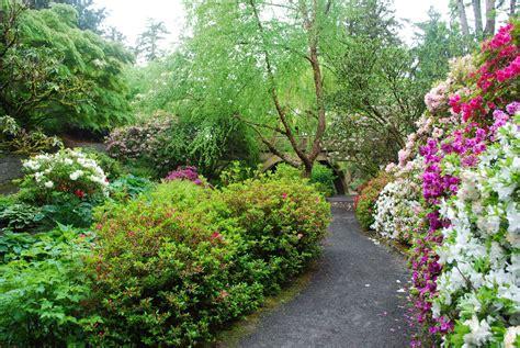 patio rhododendron springs rhododendron garden outdoor project