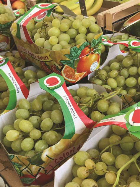 varieta uva da tavola dove va l uva da tavola italiana