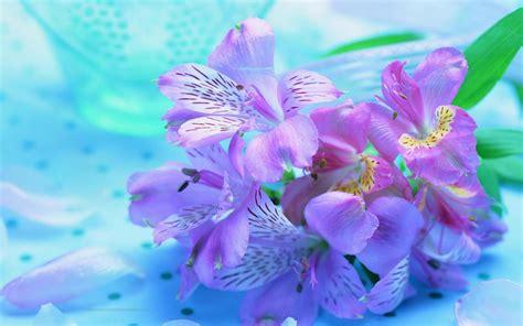 blooms hd wallpapers desktop wallpapers animals wallpapers flowers wallpapers