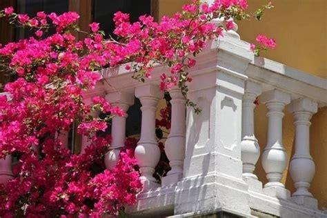 fiori da balcone resistenti al sole piante da balcone resistenti piante da terrazzo