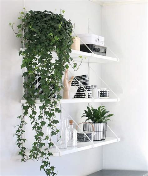 indoor plant decoration how to decorate your interior with green indoor plants and