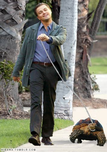 Leonardo Dicaprio Walking Meme - leonardo dicaprio walking his tortoise 10671 1288388639 3