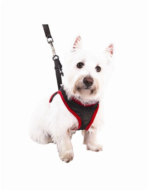 As Seen On Tv New Comfy Harness Medium 19 5 22 Inch Tali comfy harness for dogs size medium