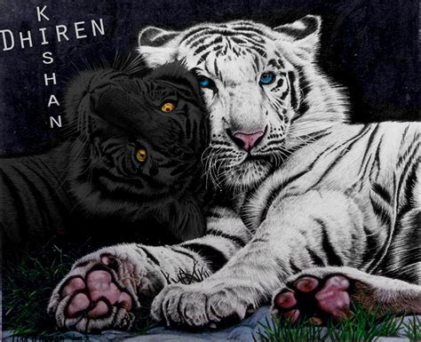 Seri Tiger Saga2tigers Quest Colleen Houck 1000 images about tiger s curse series on