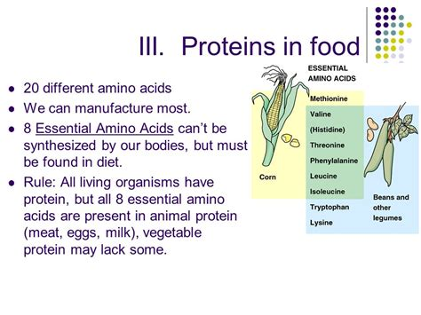 protein 8 essential amino acids food labels i objective ppt