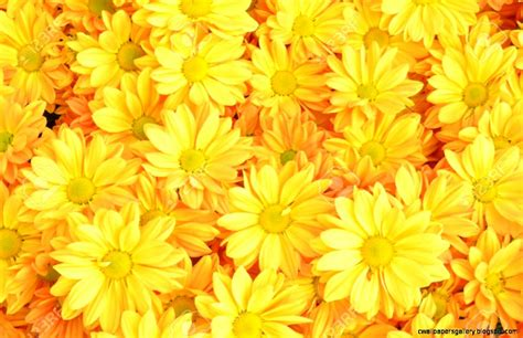wallpaper flower yellow yellow flower background wallpapers gallery