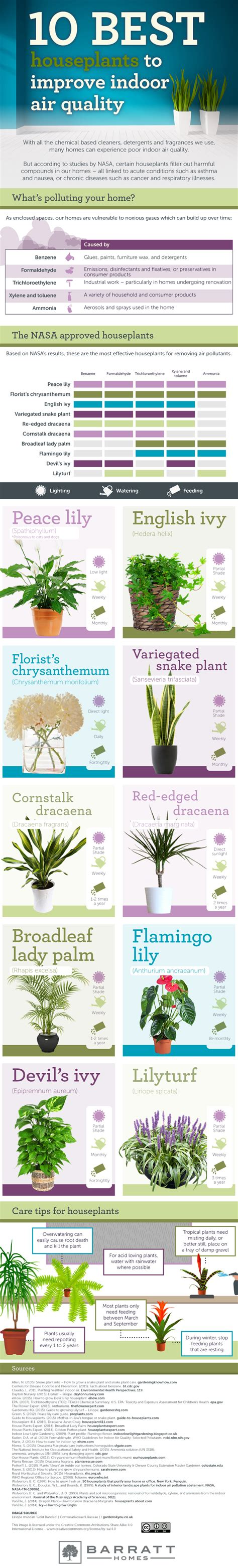 best houseplants for air quality the ten best houseplants for improved air quality