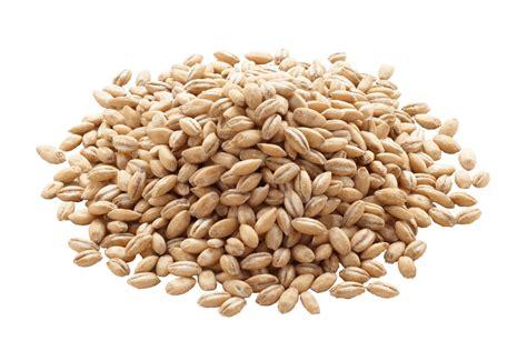 Hulled Barley organic hulled barley buy organic hulled barley in bulk from food to live