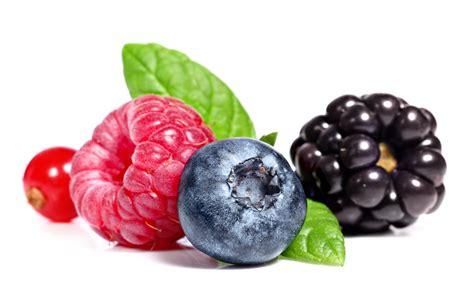 fruit or berry ingredienti d eccellenza informazione libera