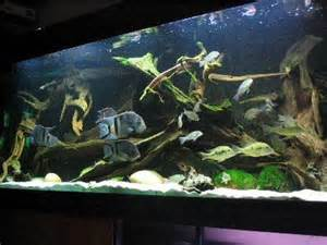 1000 images about fish tank on madagascar
