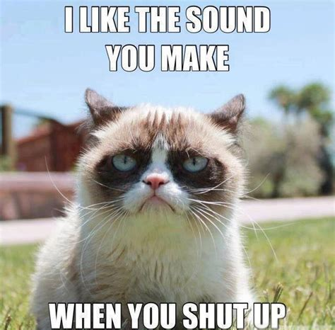 Best Grumpy Cat Meme - best cat memes of all time image memes at relatably com