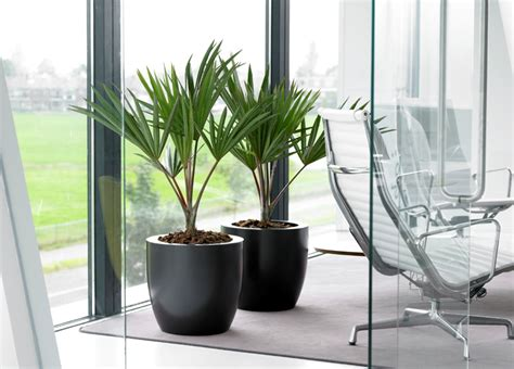 office plant 5 ways to make your office boardroom less boring