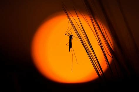 are mosquitoes attracted to uv light best bug zapper review top 5 most deadly list for oct
