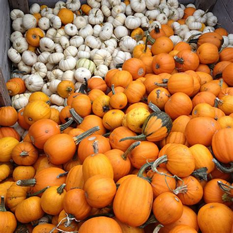 patch don t rock the boat pumpkin patch in red deer download free apps placesoftware