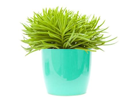 indoor small plants small indoor plants to decorate house photos pics 230290