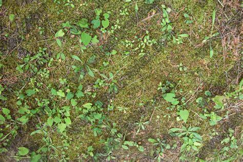 jungle floor texture forest floor terrain 0043 texturemax