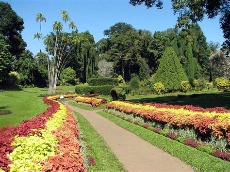 types of botanical gardens royal botanical gardens peradeniya