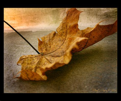 le foglie morte testo esordienti 98 le foglie morte