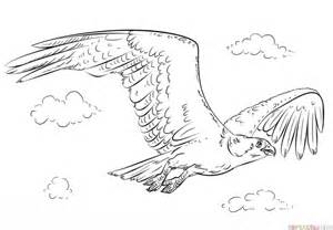 how to draw an osprey step by step drawing tutorials