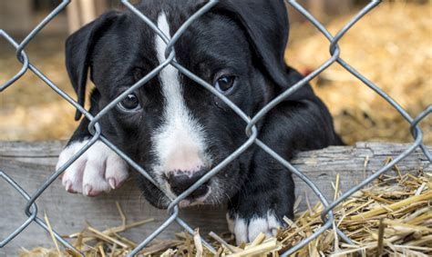 where to sell a puppy arizona has made it mandatory for pet stores to only sell rescues urdogs