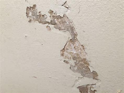 Termites Drywall Paper file termites drywall paper jpg wikimedia commons