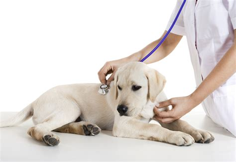 poison for dogs what are the signs of poisoning pet poison helpline
