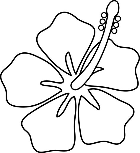 hibiscus flower coloring pages hibiscus flower line art free clip art