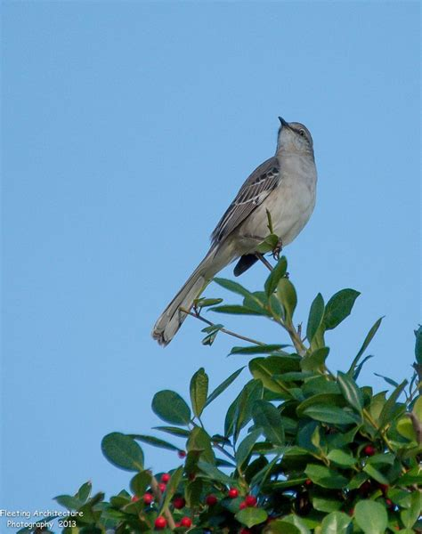 17 best images about florida birds on pinterest trips