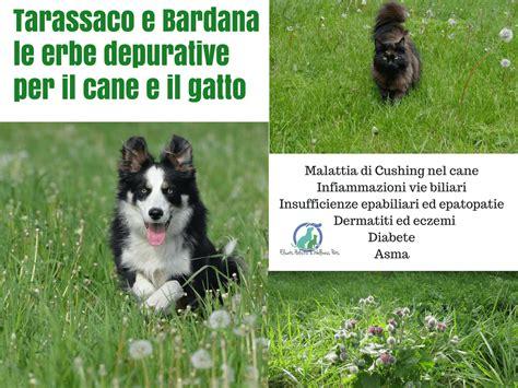 Il Tarlo Per Le tarassaco bardana le erbe depurative per il e il gatto