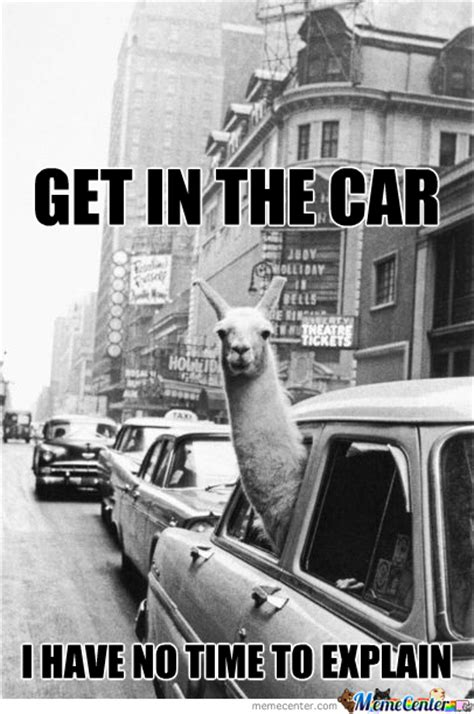 No Car Meme - llyama memes best collection of funny llyama pictures