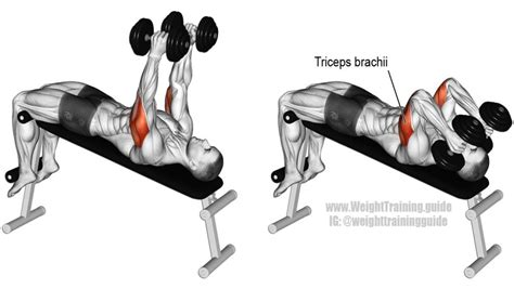 triceps extension bench press decline dumbbell triceps extension guide and video