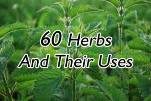 Best Herbs To Grow Indoors 60 herbs and their uses living clean pinterest