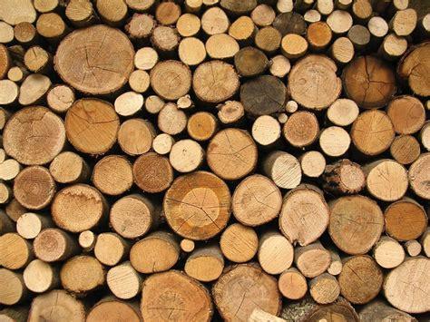 Disney Wall Mural wood log wallpaper wallpapersafari