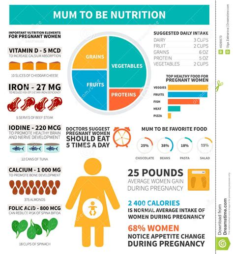 d protein during pregnancy pregnancy nutrition infographic stock vector image 40289570