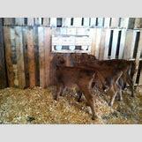 Surprised Baby Animals | 350 x 261 jpeg 21kB