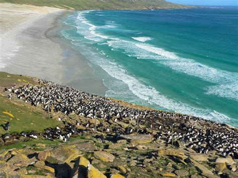 moon patagonia including the falkland islands travel guide books tour to saunders island falkland islands birding trip
