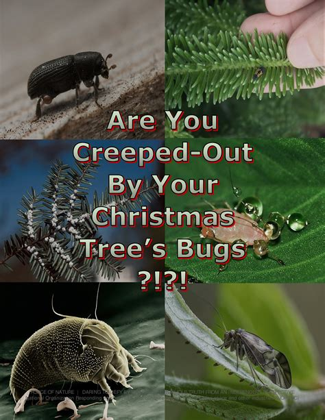 bug telkomsel anonitun desember 2017 force of nature satire happy holidays 2017 12 01