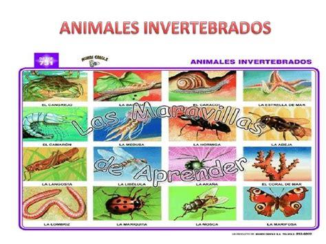 imagenes animales invertebrados animales invertebrados