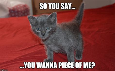 Russian Cat Meme - so you say you wanna piece of me imgflip
