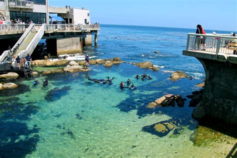 California State Monterey Bay Mba by Monterey Bay Aquarium Pictures Posters News And