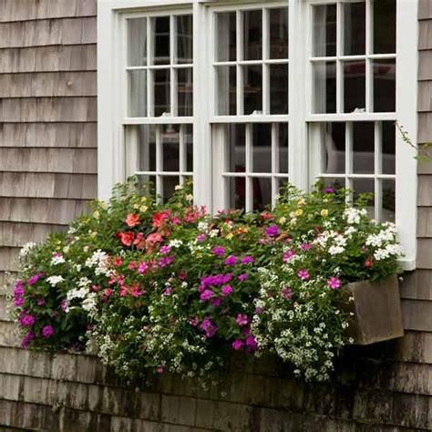 plant window boxes year installment plant a better window box garden