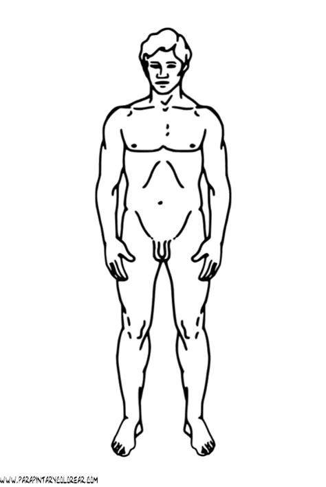 imagenes impresionantes del cuerpo humano juegos de ciencias juego de partes del cuerpo humano