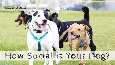 puppy social is your social