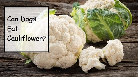 can dogs cauliflower can dogs eat vegetables like celery asparagus lettuce cabbage dan kale