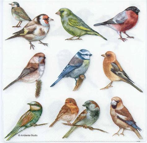 Bird Decoupage Paper - decoupage paper of bird collection