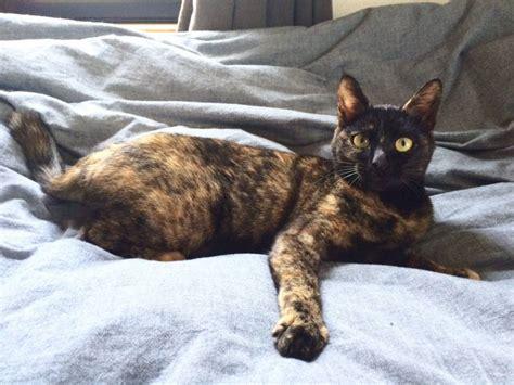 creature comforts a cat named rosabaya the japan times