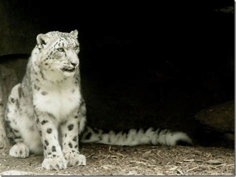 wallpaper for mac os x snow leopard 10 awesome mac os x snow leopard wallpapers